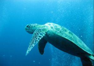 schildpad borneo
