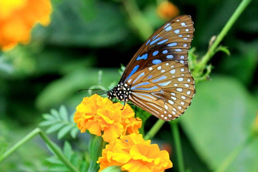 butterfly-farm-cameron-highlands