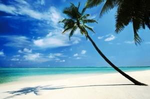 Eiland Palmboom
